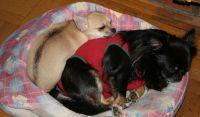 Maria-lillegutt-sleeping